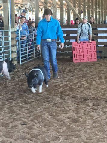 NCA District Fair Hog Show