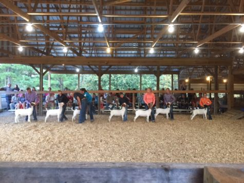 Clinton Students Find Success at Goat and Lamb Show