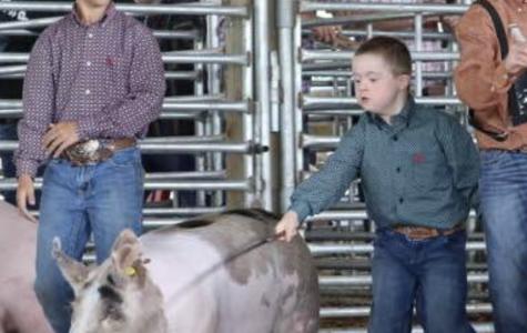 North Central Arkansas District Fair Livestock Show